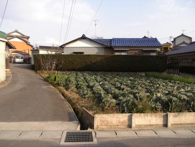 Casas e Verduras lado a lado